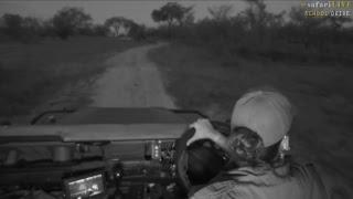 Download safariLIVE - Sunset Safari - Nov. 9, 2017 Video