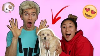 Download SURPRISING STEPHEN WITH A PUPPY!! (EMOTIONAL) Video