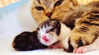 Download 猫咪生了两只宝宝本是开心的事,没想到结局却让女主人哭红了双眼 Video
