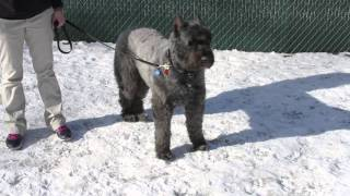 Download How to Approach a Dog Safely Video