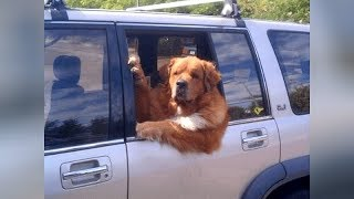 Download FUNNY DOGS, the LONGER YOU WATCH the FUNNIER THEY GET! - Super FUNNY VIDEOS Video