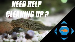 Download Best Freshwater Aquarium Cleanup Crews Video