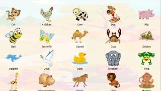 Download สัตว์โลกน่ารัก คำศัพท์ภาษาไทย ภาษาอังกฤษ วีดีโอสำหรับเด็ก คำศัพท์สำหรับเด็ก Video