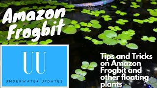 Download Amazon Frogbit: TIPS and TRICKS Video