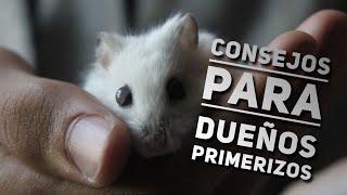 Download 8 CONSEJOS para CUIDAR a tu PRIMER HÁMSTER Video