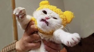 Download 🤣 Funniest And Cutest 🐶 Dogs And Cats 😻 Funny Pet Animals' Life 😇 Video