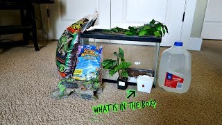 Download Guess what new animal I got for my reptile room Video