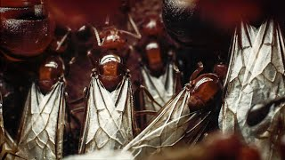 Download Swarm of Ants Flies For The First Time | Empire Of The Desert Ants | BBC Earth Video