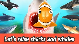 Download [EN] Let's raise sharks and whales! sharks and whales names for kids, coco animation ㅣCoCosToy Video