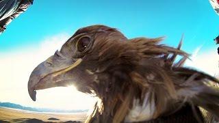 Download GoPro: Golden Eagle POV Flight in 2.7K Video