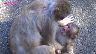 Download Baby monkey crying : baby monkey Videos Compilation Video