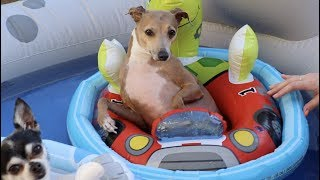 Download Throwing My Dogs A Pool Party Video