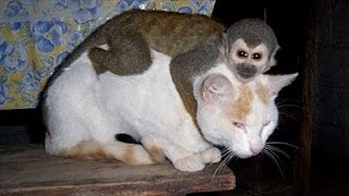 Download Monkeys annoying other animals – Funny animals compilation Video