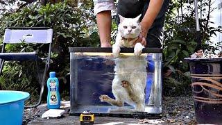 Download 【地域猫】忙しくてちょっとフキフキをサボったらハクちゃんがゴミ猫化していたⅡ【魚くれくれ野良猫】 Video