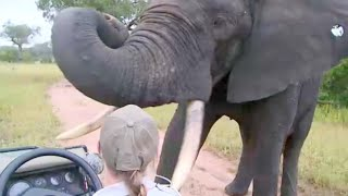 Download Close Encounters with Elephants Video