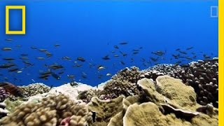 Download Rising Ocean Temperatures are ″Cooking″ Coral Reefs | National Geographic Video