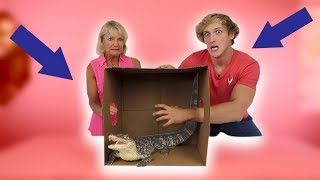 Download DEADLY WHAT'S IN THE BOX CHALLENGE! **Live Animals** Video