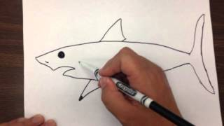 Download How to Draw a Great White Shark Step by Step Video