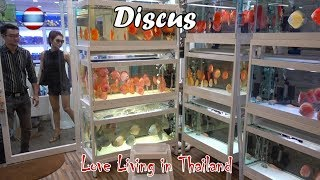 Download Discus Fish Market WORLD'S LARGEST Bangkok Thailand Video
