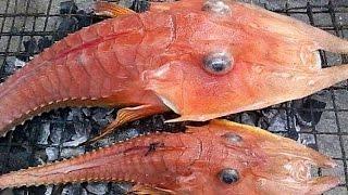 Download Fishermen discover STRANGE Rare Fish Video