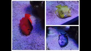 Download SCA 120 Gallon Reef | Ep.17 | They are All DEAD!!! Whats next ?! Video