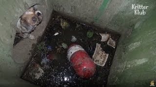 Download Dog Can't Escape From The Drain | Animal in Crisis EP12 Video