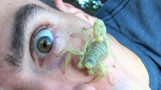 Download 4K Scorpion Camps On My Face, Wont Leave. Nature Travel Fishing Herping. Video