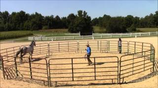Download Monty Roberts works with Two Punch Willy Video