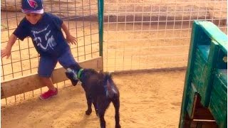 Download GOAT ATTACKS DEION!! (camel farm vlog 11/19/16) Video