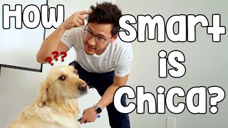 Download HOW SMART IS CHICA?? Video