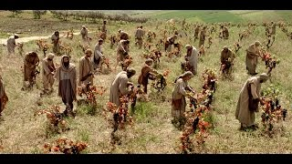 Download The Parable of The Laborers In The Vineyard Video