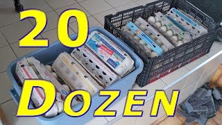 Download Food Bank Donation 240 Duck Eggs Video