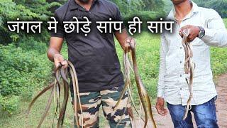 Download जंगल मे रिलीस किये सांप ही सांप | Snakes released in the forest from Ahmednagar Video