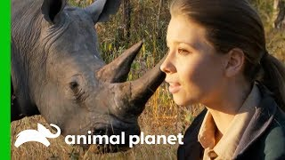 Download Bindi Has a Magical White Rhino Encounter in the African Bush | Crikey! It's The Irwins Video