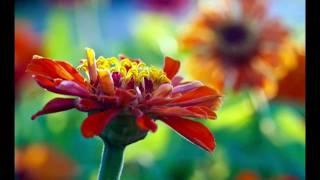 Download Bloom - Ryan Farish Video