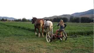 Download Mowing Hay with Horses Video