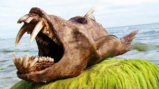 Download 10 Most Bizarre Deep Sea Creatures Video