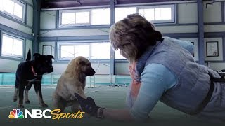Download 2018 Winter Olympics: Meet the legendary South Korean dog breed, the Jindo | NBC Sports Video