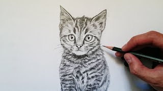 Download Cómo dibujar un gato realista explicado paso a paso Video