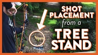 Download Shot Placement from a Treestand Video