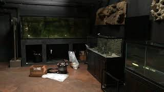 Download EPIC FISH ROOM Video