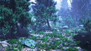 Download Rain Sounds in Woods for Sleeping or Studying | Rainstorm White Noise 10 Hours Video