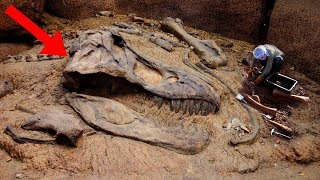 Download Most AMAZING Fossil Discoveries Ever! Video