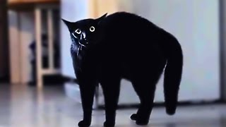 Download Scared cats compilation Part 1 Video