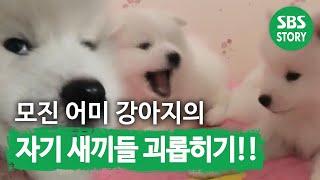 Download TV동물농장(503회) 11 Video