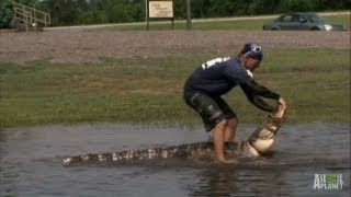 Download Gators Take Over Flooded Field | Gator Boys Video