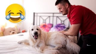 Download My Funny Dog Wants to Get on My Bed at any Cost Video
