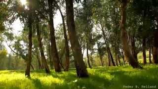 Download Beautiful Nature Video & Relaxing Music - Echoes of the Forest (HD) Video