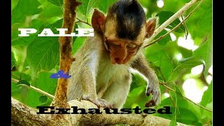 Download It Shocks Me To See Mom Pinny Abandoned Her Baby Monkey Pinky Alone While He Is Very Sick Like This Video