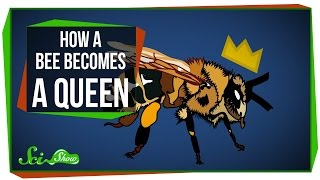 Download How a Bee Becomes Queen Video